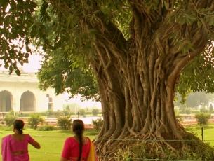 FEMMES DANS UN PARC - OLD DELHI, INDE