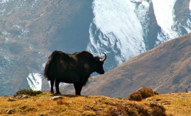 Le voyage culturel au Népal - Bhoutan - Inde