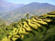 Helambu Trek Nepal